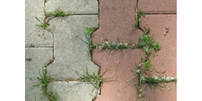 Защита тротуарного покрытия от прорастания травы